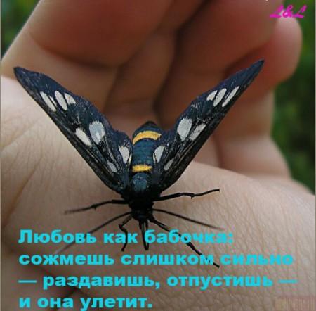 3806745_1223929465_009 (450x442, 50Kb)