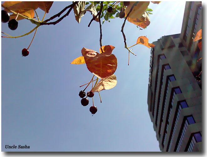 Foto-0012.06.11.1.a (661x501, 68Kb)