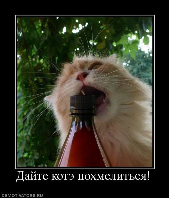 304836_dajte-kote-pohmelitsya (543x636, 45Kb)