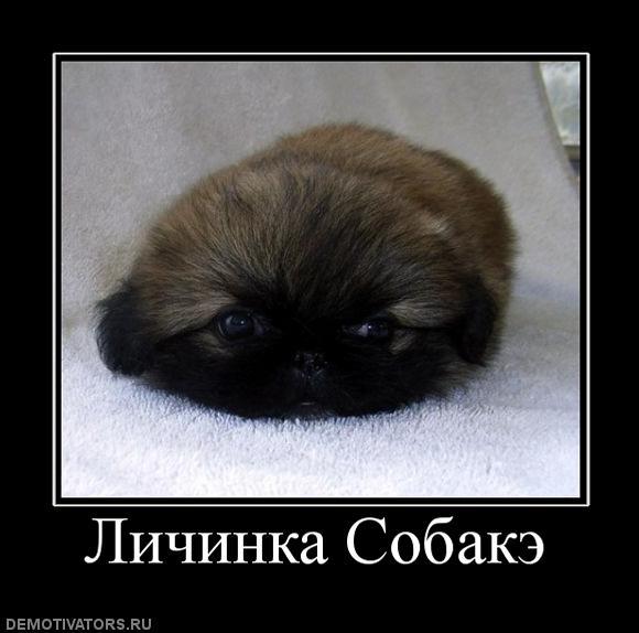 781903.324251_lichinka-sobake (580x574, 38Kb)