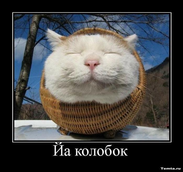 1266216756_demotivatori-s-kochkami_12 (700x657, 59Kb)