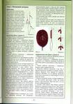 Книги - Волшебный бисер.  Е.Башкатова File0009