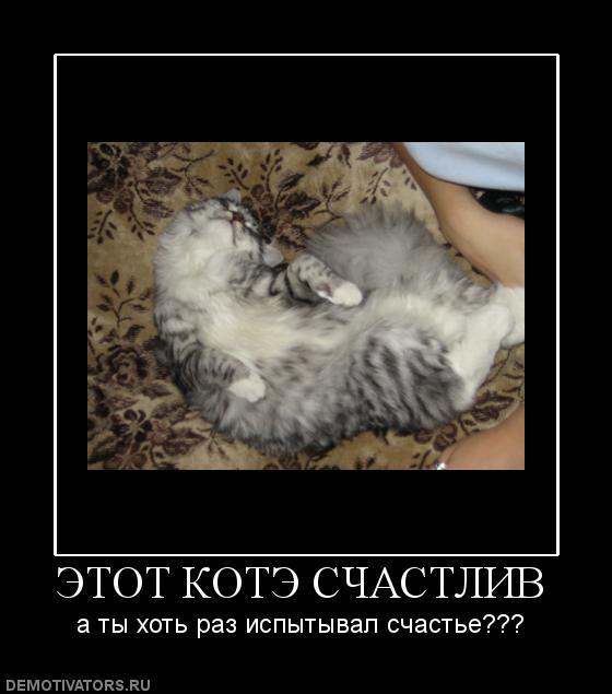 755271_etot-kote-schastliv (560x635, 38Kb)