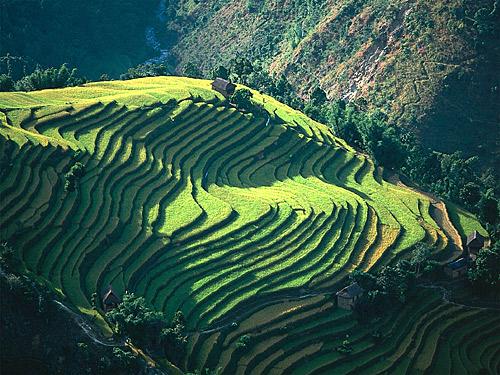 Nepal-03-rizieres (500x375, 115Kb)