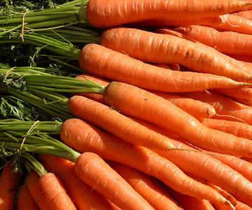 4216969_carrot (360x300, 41Kb)