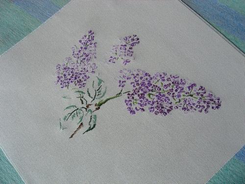 сирень-Lilac-MTSA (500x375,