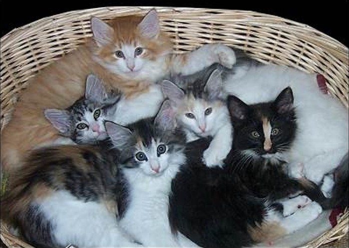 5-kittens-basket (700x497, 83Kb)