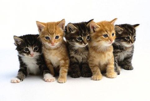 kittens (482x327, 29Kb)