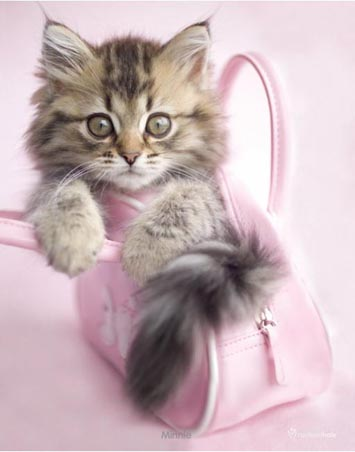 lgmpp50153+minnie-the-kitten-in-a-handbag-rachael-hale-mini-poster (355x452, 44Kb)