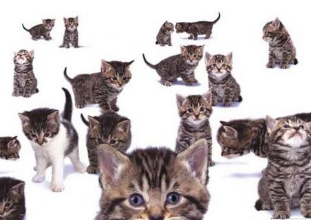 lgph0156+curious-kittens-kittens-poster (452x320, 33Kb)