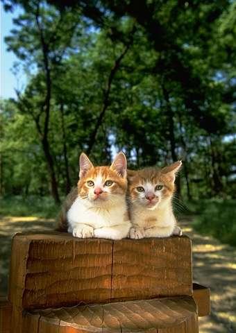 343875.cat_0074 (340x480, 22Kb)