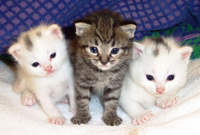 kitten (700x471, 124Kb)