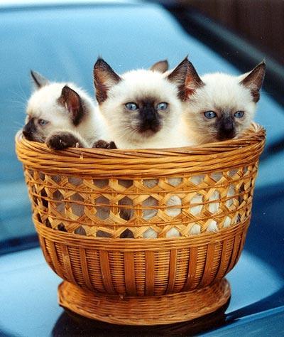 kittens-6 (400x474, 39Kb)