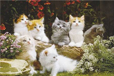 lgwiz02715+fluffy-kittens-cute-baby-cats-poster (452x301, 81Kb)