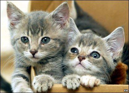 _48513697_kittens (416x300, 33Kb)