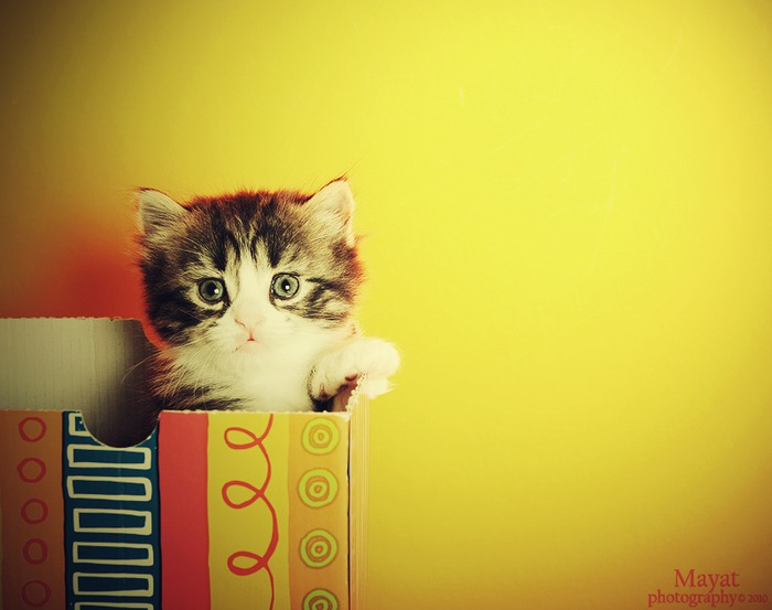 cute_look_Kitten_1_3_by_mayat_s (700x553, 59Kb)
