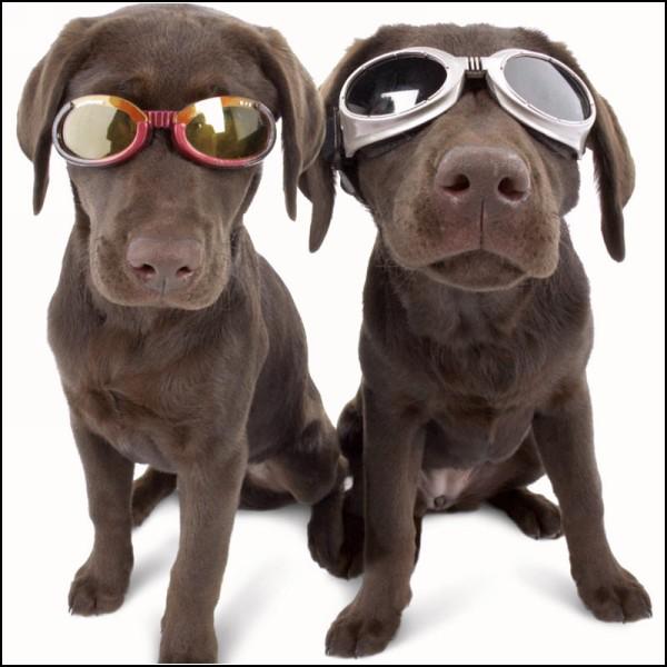 doggles-protective-eyewear-dogs-1 (600x600, 71Kb)