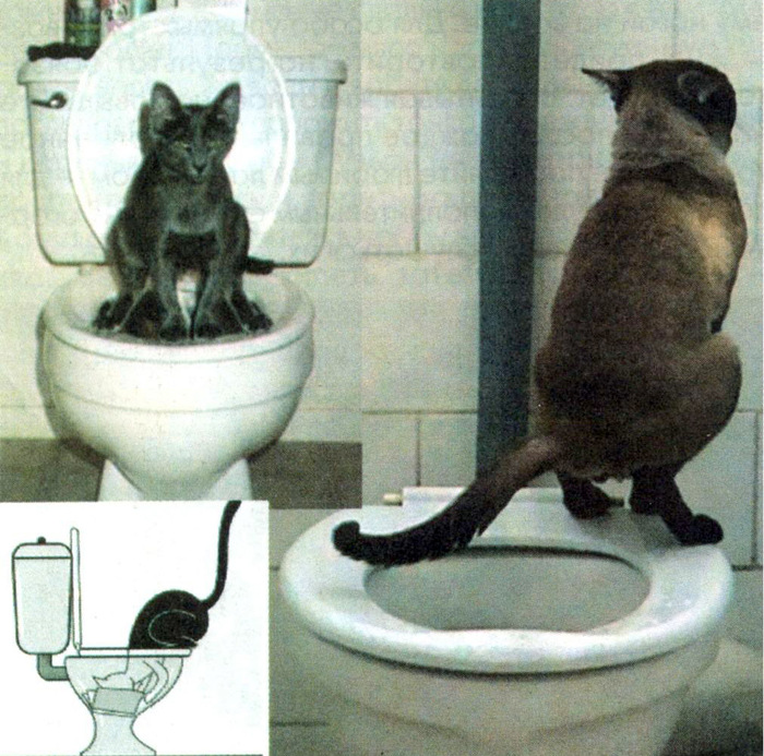 cat1 (700x693, 191Kb)