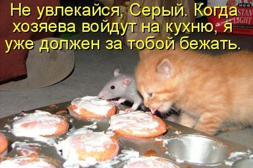 1246253913_1229156336_38kotov[1] (500x332, 51Kb)