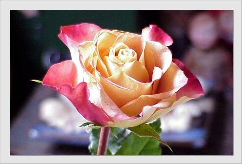 carte_fleurs016 (496x336, 71Kb)