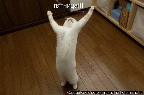 Пятница(кот) (600x398, 29Kb)