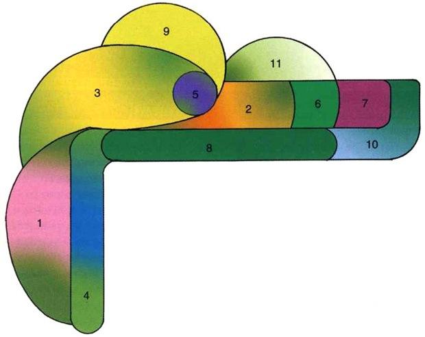 Цветник из лекарственных цветов - схема.