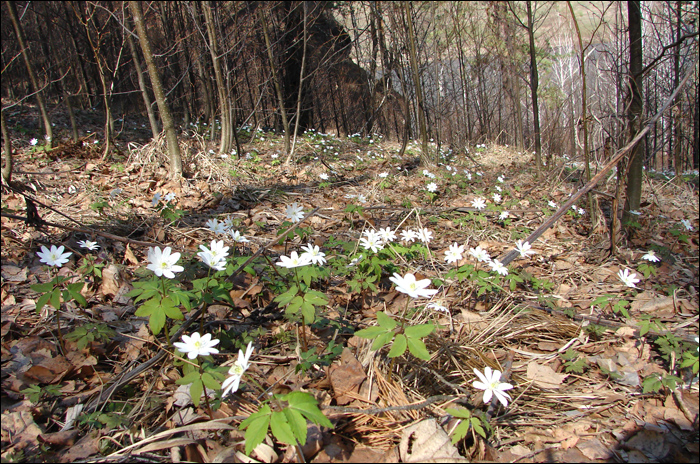 13 - цветы, поляна (700x464, 421Kb)
