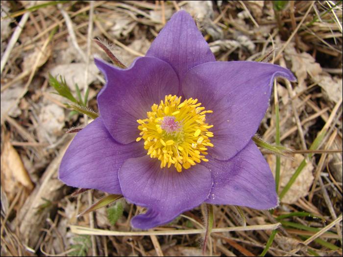 23 - цветок (700x525, 273Kb)
