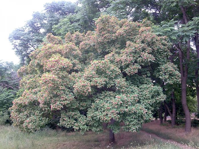 дерево/4348076_Foto190 (700x525, 395Kb)