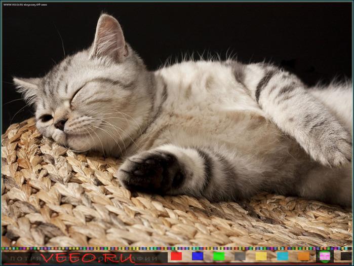 veeo-cats-bosf (700x525, 141Kb)