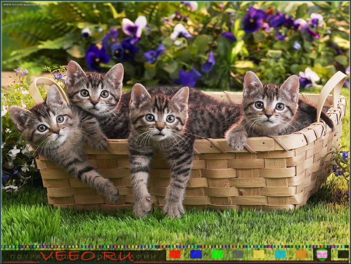 veeo-cats-bwcn (700x525, 196Kb)
