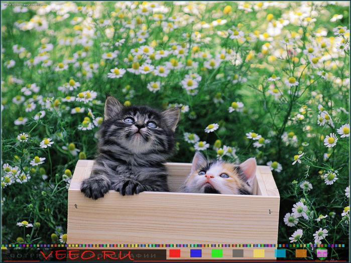 veeo-cats-aaan (700x525, 193Kb)