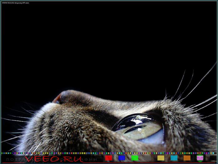 veeo-cats-ahkv (700x525, 90Kb)