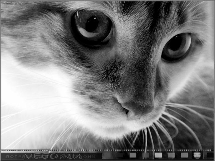 veeo-cats-asnh (700x525, 96Kb)