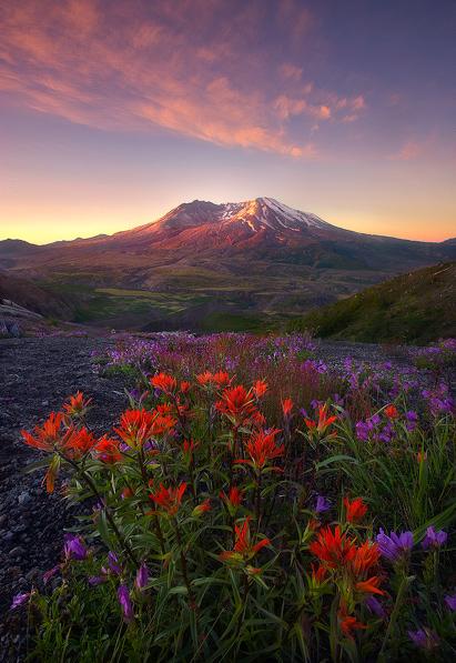 Fire-Mountain-Flowers (411x597, 183Kb)