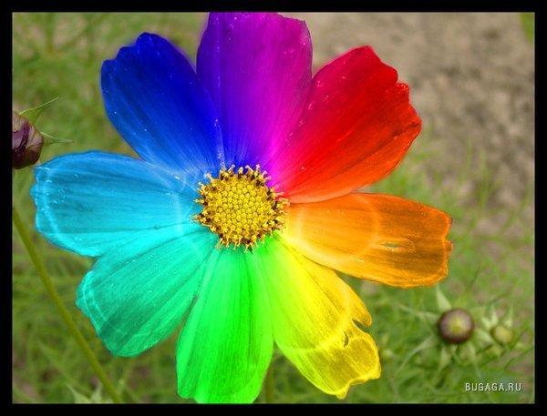 40388000_1209384427_flower_rainbow_by_nessaraul1 (600x457, 48Kb)