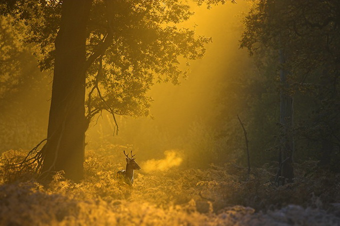 wildlife-photos-by-ben-hall-03 (680x453, 111Kb)