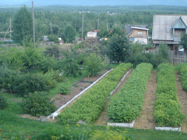 Замечательный огород Игоря Лядова.