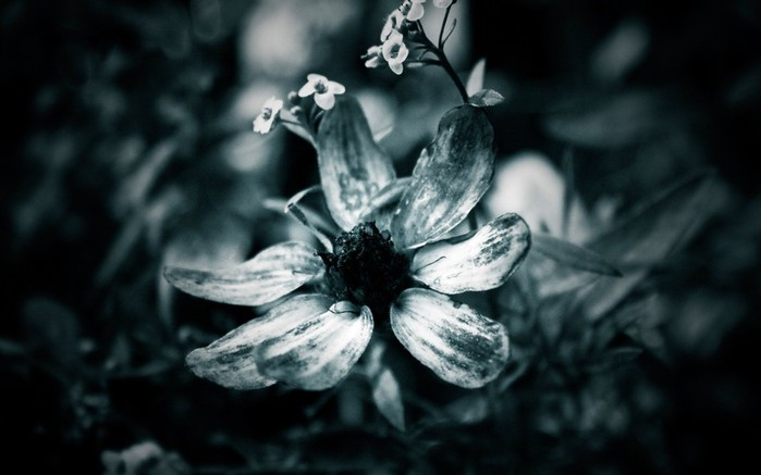 Nature_Flowers_Black-and-white_flower_027550_ (700x437, 53Kb)