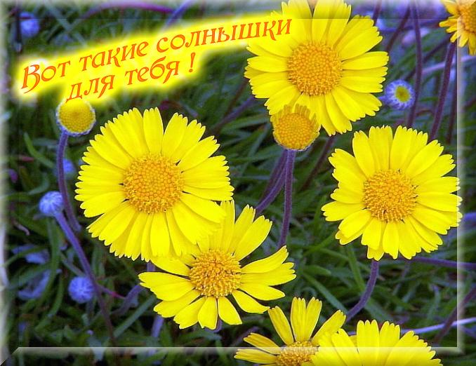 20801464_solnuyshki (678x522, 285Kb)