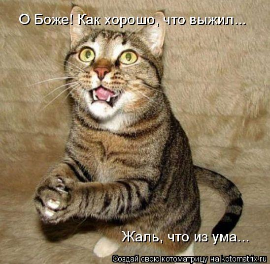кот .. выжил из ума (548x537, 58Kb)