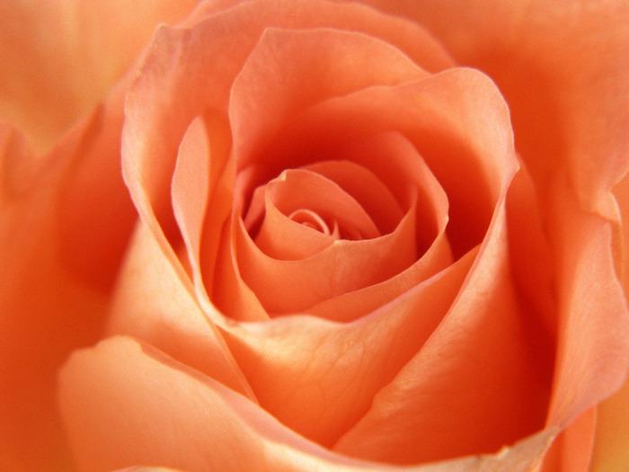 Каталог цветов с картинками 1