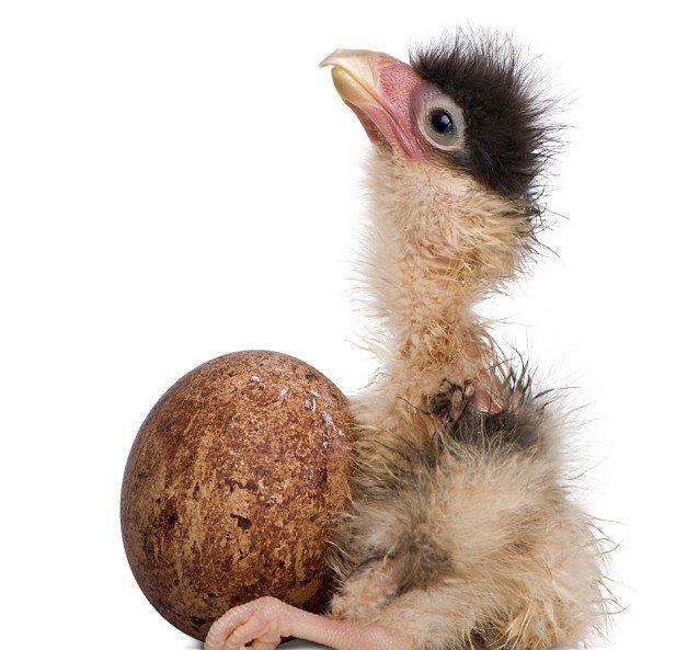 chick (2) (638x593, 56Kb)