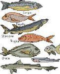 Превью Fish (197x242, 16Kb)