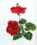 Превью TG 3081 Hibiscus (304x365, 20Kb)