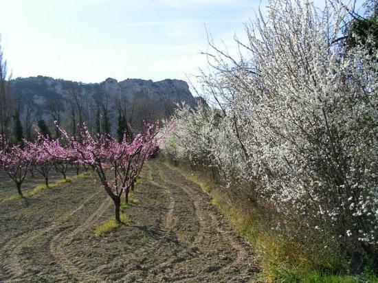 autres-arbres-avignon-france-9018213153-931478Route vers villeneuve, AVIGNON (550x412, 239Kb)