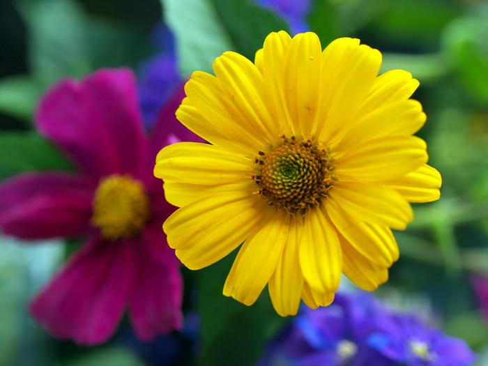 3flowers (700x525, 117Kb)
