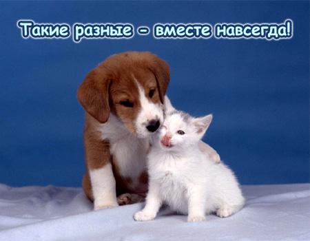 Такие разные-вместе навсегда! Кот и собака (450x350, 48Kb)