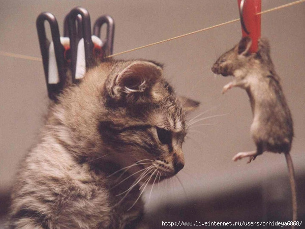 ...http://beon.ru/test s/226-493.html.  На какое животное ты...