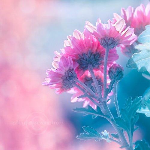 Аватарка цветок, бесплатные фото, обои ...: pictures11.ru/avatarka-cvetok.html